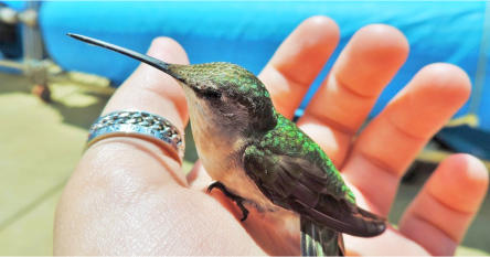 Holy Hummingbird! - Energy Healing For Animals